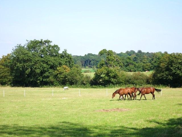 Horses by the Loop