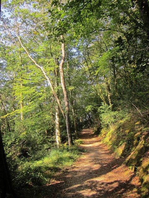 NCN2 in Kilminorth Wood