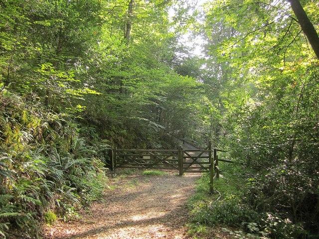 Gate on NCN2