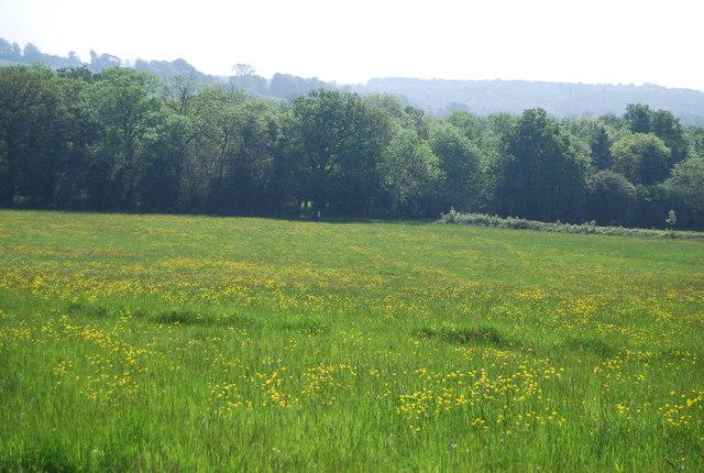 Meadow by Cornford Lane