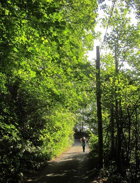 Lane to Kilminorth Farm