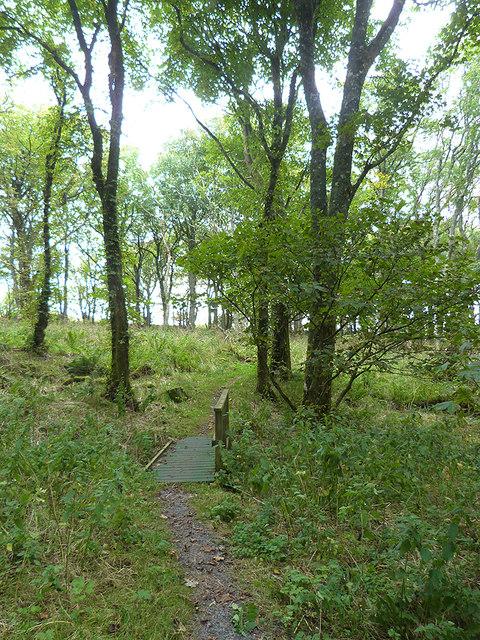 Woodland Trail, Gruinart RSPB Reserve