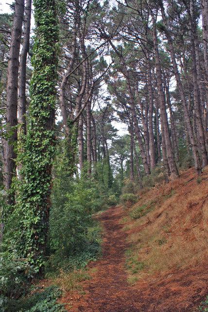 Path towards Old Paignton Road