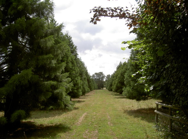 An avenue in the countryside