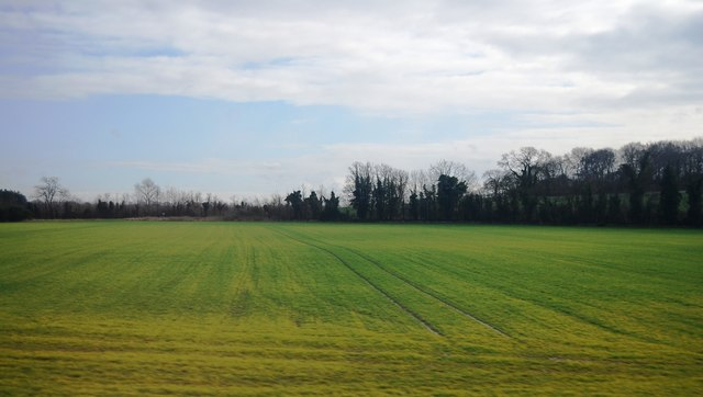 Tramlines in a field