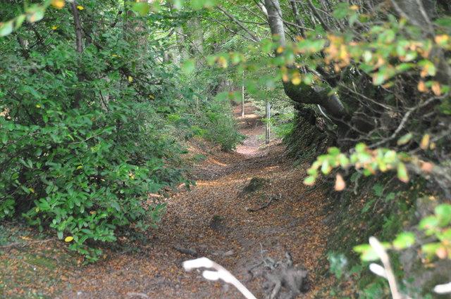 Taunton Deane District : Footpath