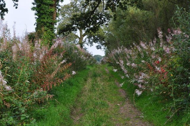 Taunton Deane District : Small Path