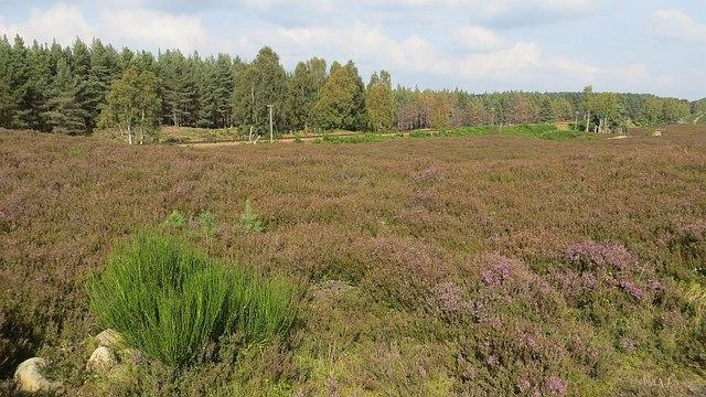 Moorland near Loch Vaa