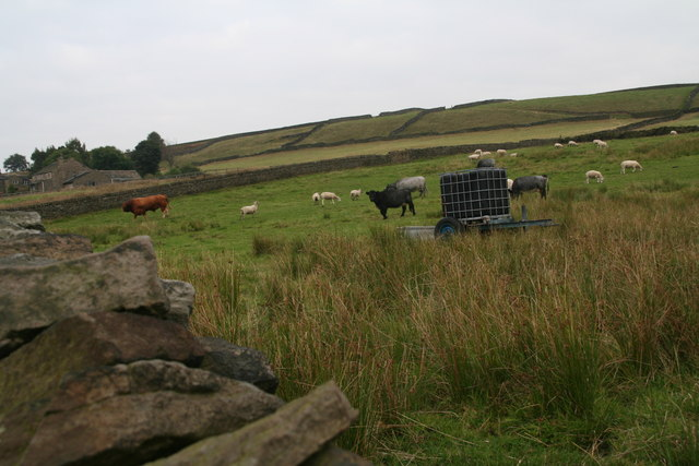 Sheep, cows and a ginger bull by Green Gate