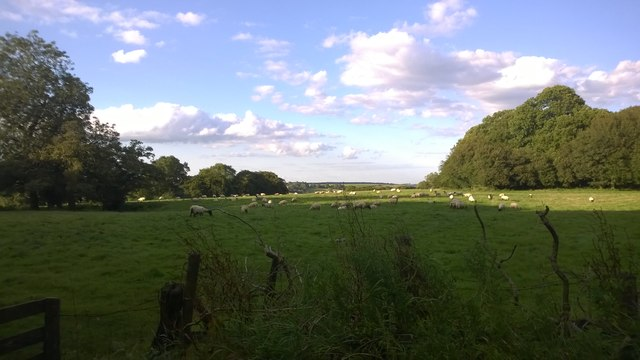 Footpath between Collards Wood and Tye Wood