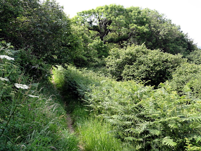 A Woodland Clearing on the Coast Path