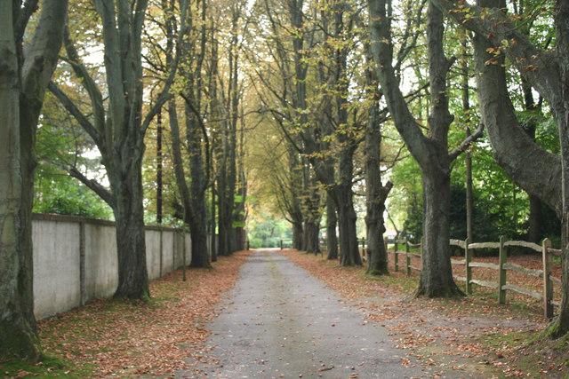Banstead: Avenue of beeches leading to Haughdell House