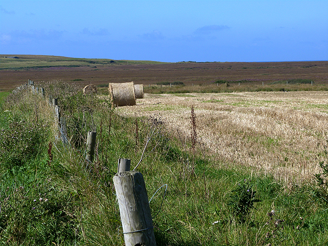 Field and marshes at Kilchoman