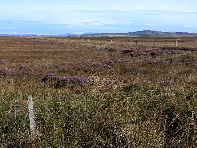 Marshy  land near Saligo
