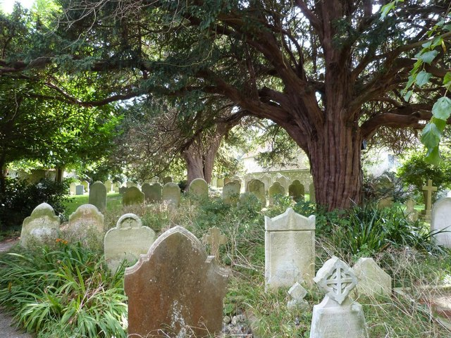 Old Yews in an overgrown churchyard, Yapton, parish church