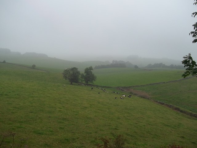 Fields and Livestock seen from the Tissington Trail