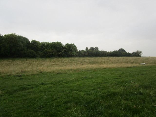 Plantation near Danebury Hill