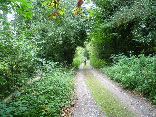 Track near Lambert Cottage Wood