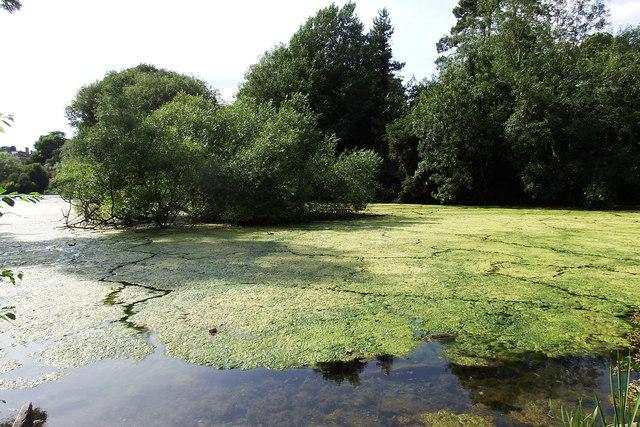 Manor Park lake