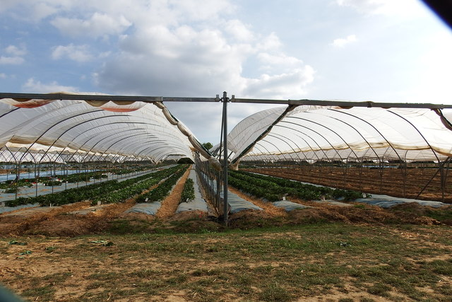 Greenhouse domes