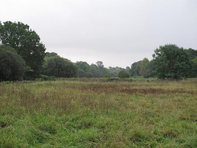 South Marsh, near Spring Wood, Cranham Marsh Nature Reserve