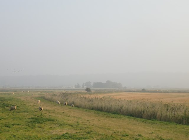 Grazing and arable marshes west of the Decoy Fleet