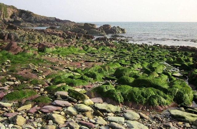 Weed-covered rocks, Rotterdam Beach