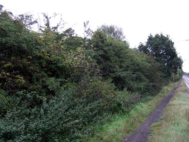 Woodland beside the A18