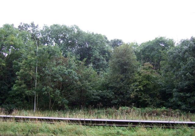 Yarborough Wood