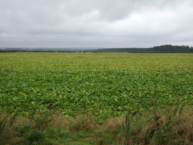 Crop field east of Ermine Street Roman Road