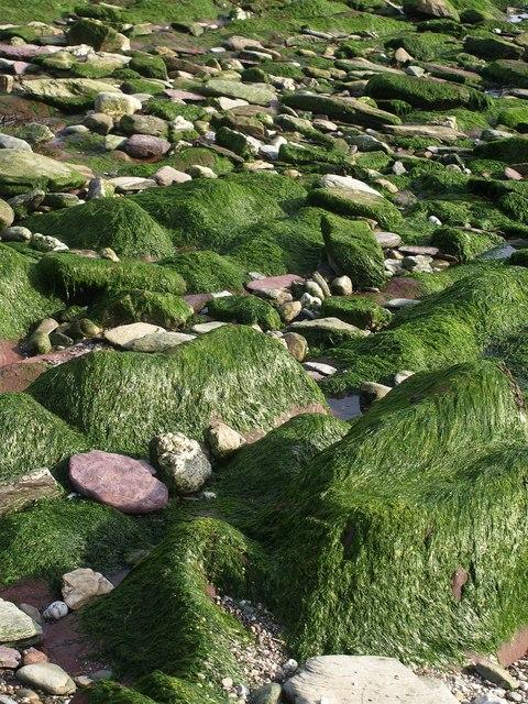 Seaweed-covered rocks, Rotterdam Beach