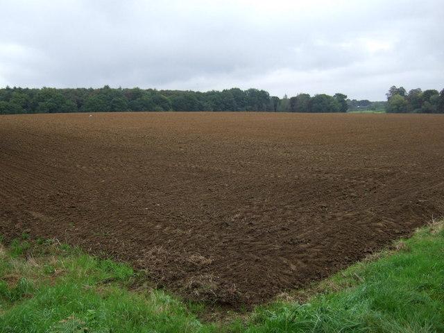 Farmland near Scawby