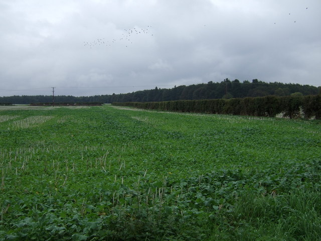 Crop field near Greetwell