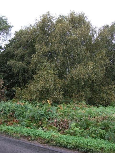Woodland off Brigg Road
