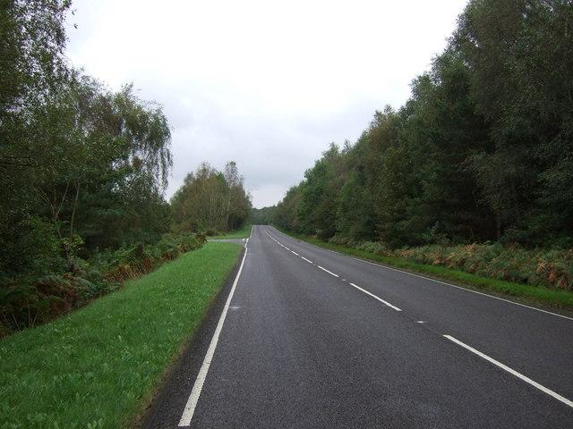 B1398 heading north west through woodland