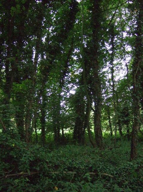 Woodland off Holme Lane