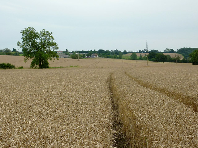 Wheat field north-west of Wilmcote, Warwickshire