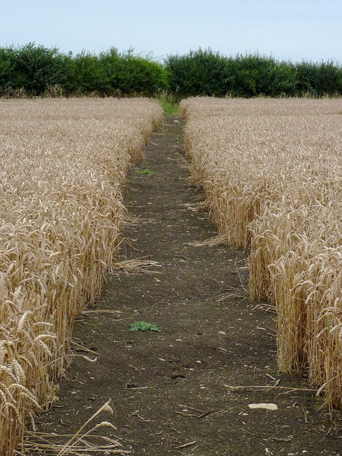 Footpath and wheat field north-east of Wilmcote, Warwickshire