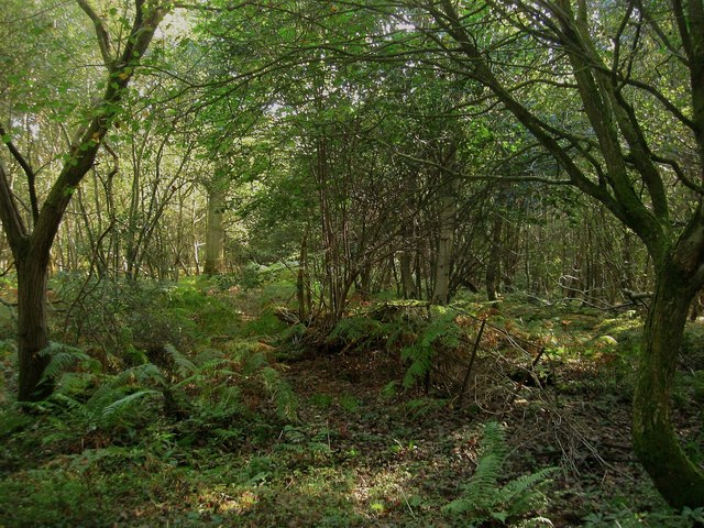 Little Coppice