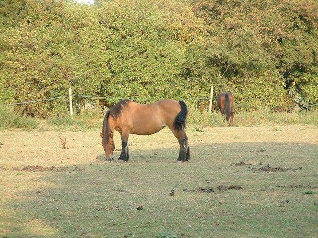 Horse in a field at Adbolton