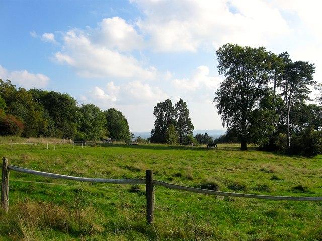 Barn Field (2)