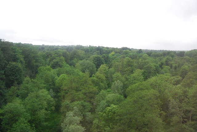 Woodland below the Welwyn Viaduct
