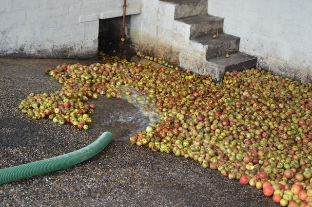 Washing the apples at Perrry's Cider