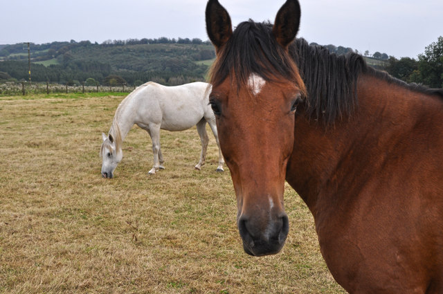 West Somerset : Horses Grazing