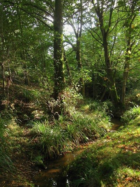Unnamed Stream, Wykehurst Park