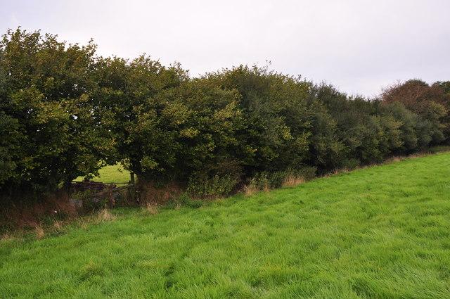 West Somerset : Grassy Field & Hedgerow