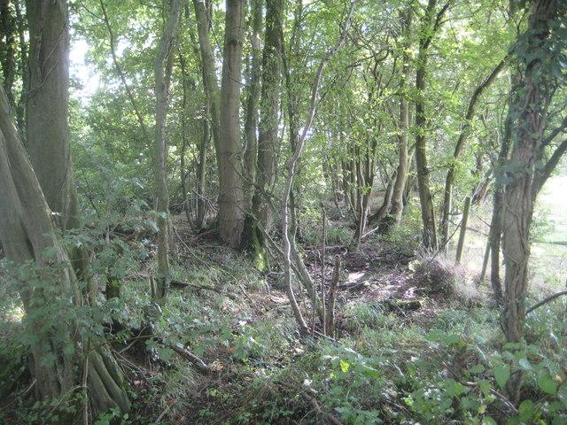 Levens Green: Beggarman's Wood