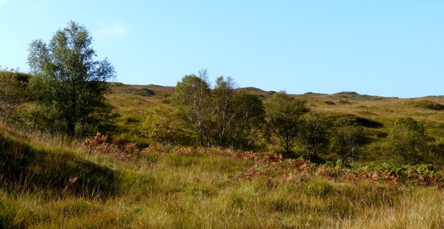 Trees along hidden Allt an Fhaing