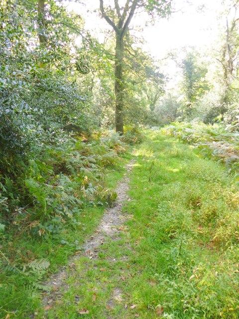 Godshill Inclosure, path