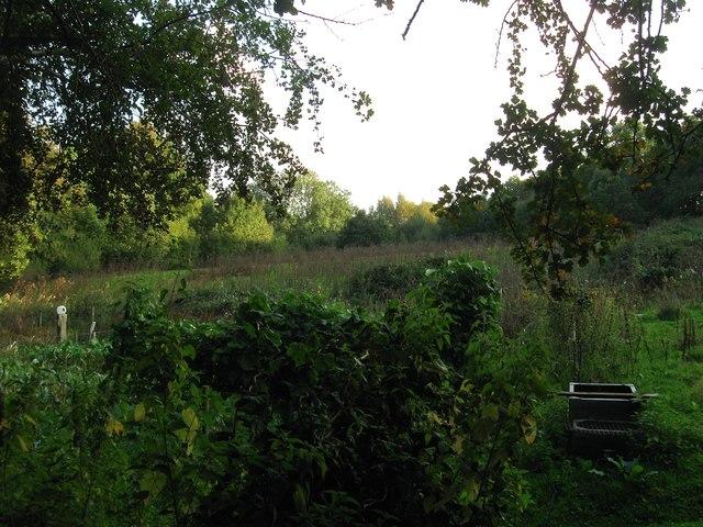Coneyboro Field